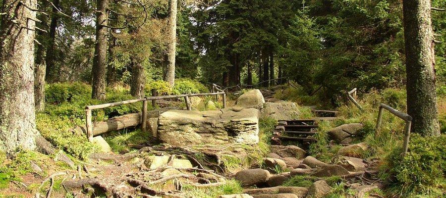 Nationalpark Harz in Sachsen-Anhalt und Niedersachsen