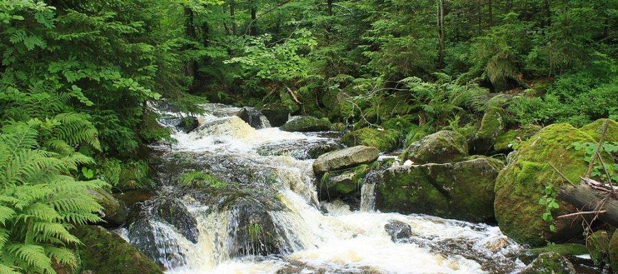 Nationalpark Bayrischer Wald in Bayern