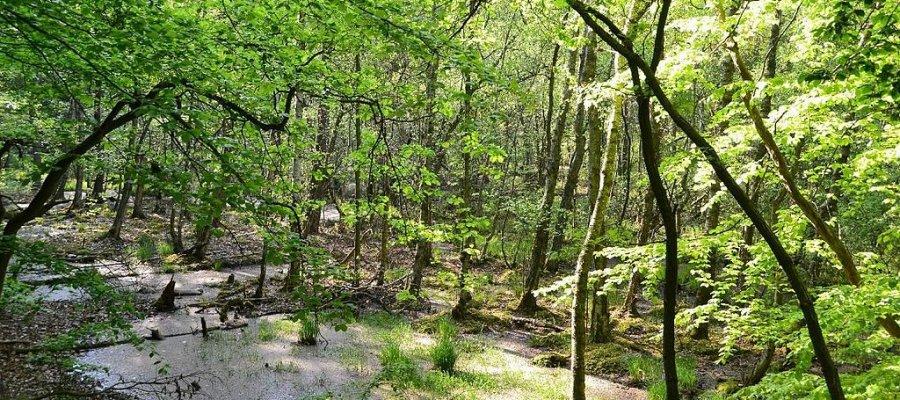 Müritz Nationalpark in Mecklenburg-Vorpommern
