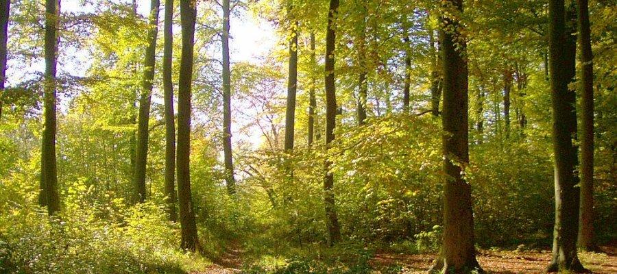 Nationalpark Hainich in Thüringen